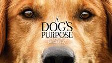 dogs-purpose125
